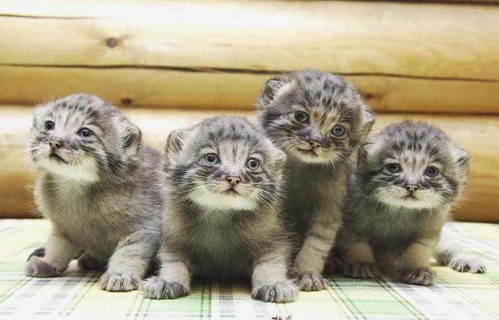Необычные котята.