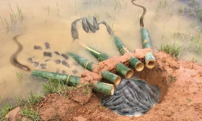 До гениальности простая ловушка для рыб прямо на берегу водоема