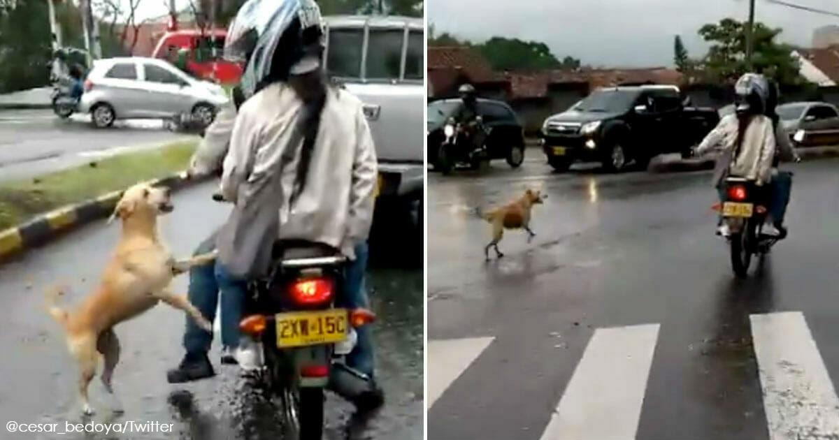 Собака отчаянно бежит за хозяевами после того, как они её бросили