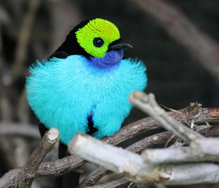birdie09 Топ 10 самых красивых птиц в мире