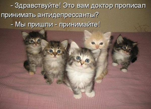 Лечение...кошками.