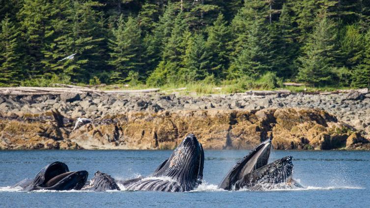 Викторина о китах и дельфинах - 2. Кто самый большой, откуда пошли «три кита» и кто такой Левиафан?