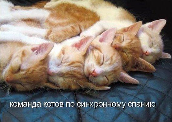 Дружная команда (котоматрица)