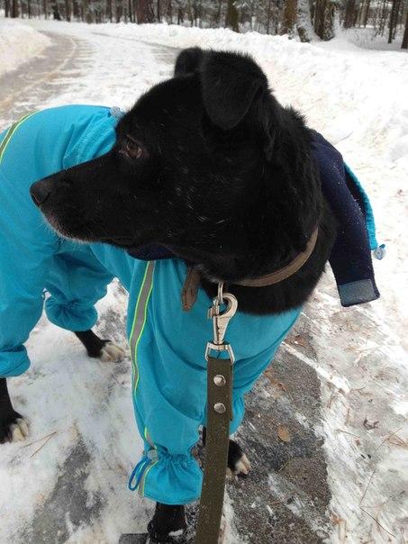 Счастливая история собаки-инвалида