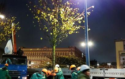 Собянин: программа посадки деревьев в столице беспрецедентная