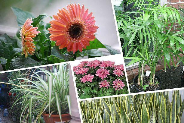 18 полезных комнатных растен…