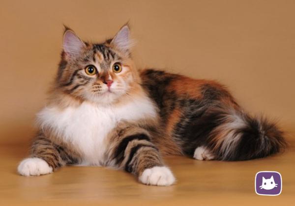Приметы, связанные с кошками. Часть 2: Что в цвете мне твоём…