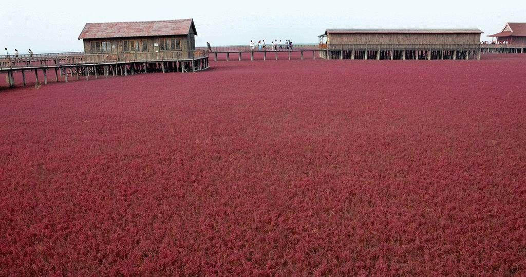 Красный пляж в Китае (8 фотографий), photo:6