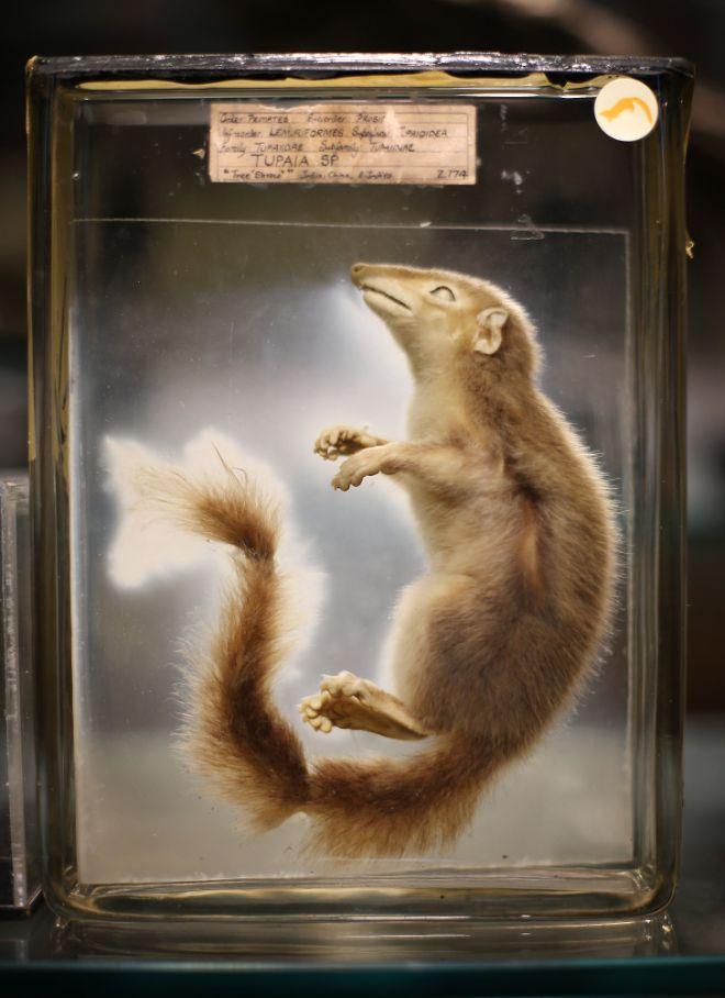 gmoz25 Лондонский музей зоологии и сравнительной анатомии Гранта