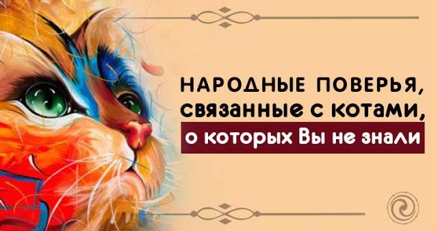 Народные поверья, связанные с котами, о которых Вы не знали