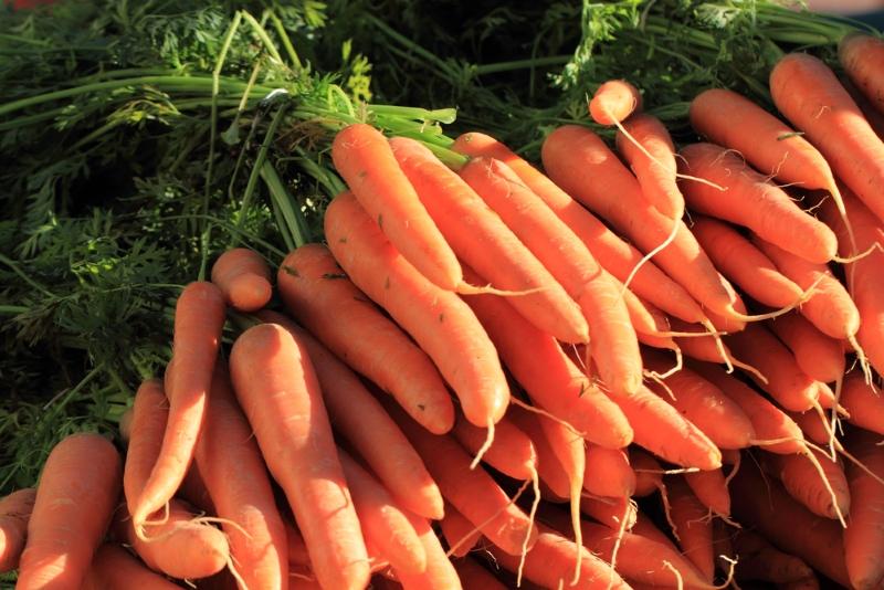 посадка моркови без прополки