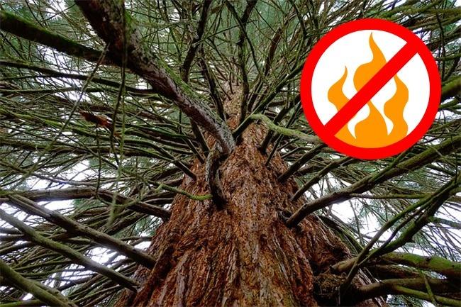 Мифы о деревьях, в которые до сих пор верят