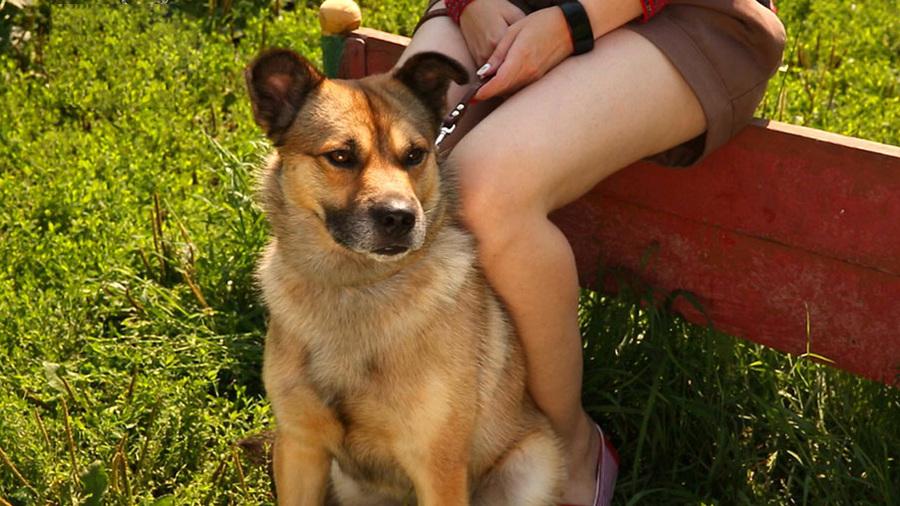 Необыкновенный пёс Барбос