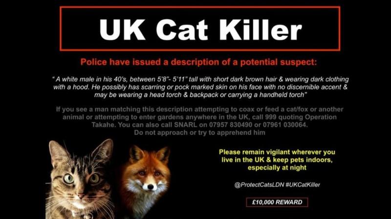В Британии ищут убийцу котиков