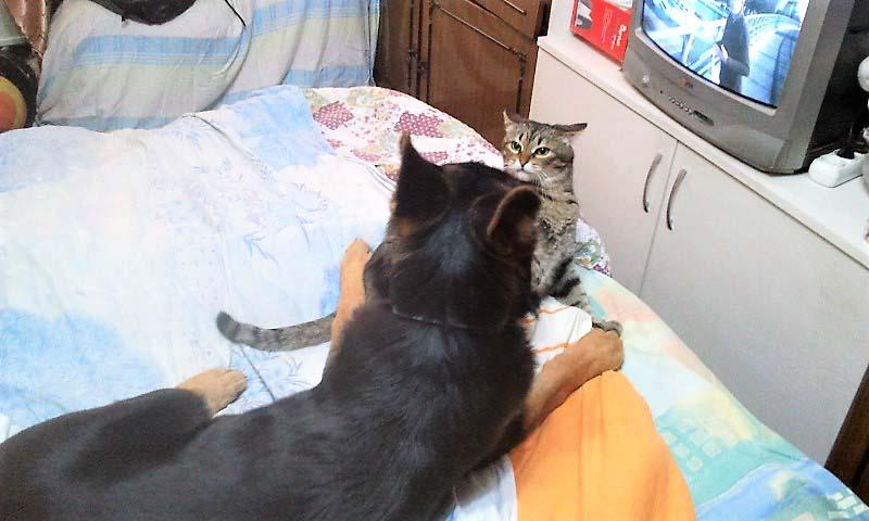 Как найти в квартире кошку?