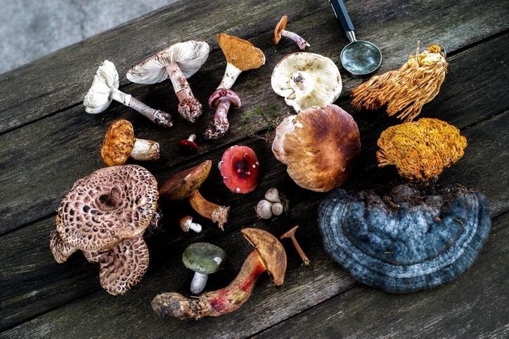 5 видов грибов для иммунитета