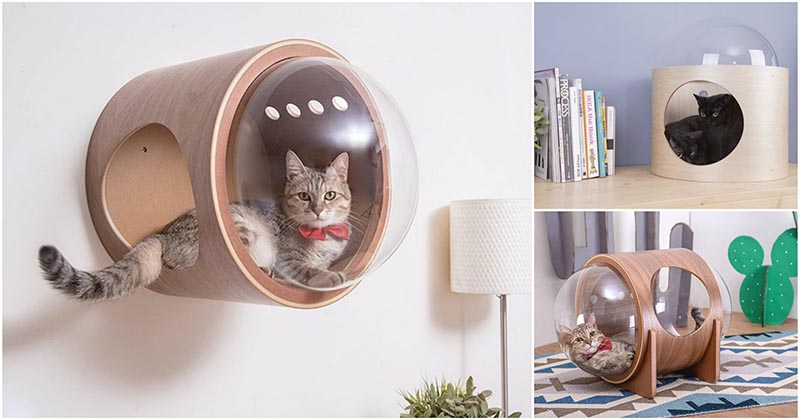 Альфа, Бета или Гамма? Чудные «космические» лежаки для кошек