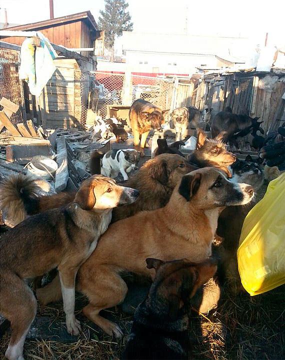 В Барнауле живет женщина–«собака». Она спит в вольере и питается вместе с четвероногими