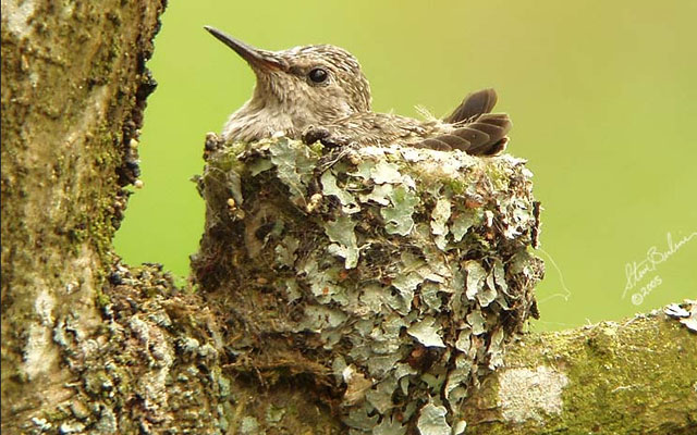 Удивительное поведение птиц