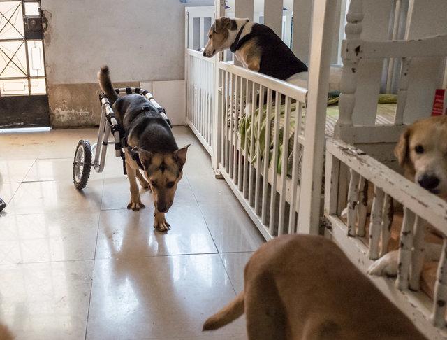 форум как ухаживать за парализованной собакой ребёнка грудью
