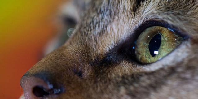 Кот спас хозяйку и получил премию посмертно