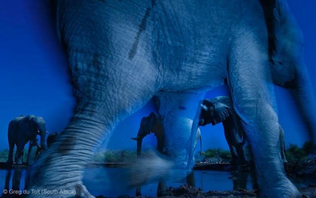 Забавные фото победителей конкурса Wildlife Photographer of the Year (2)