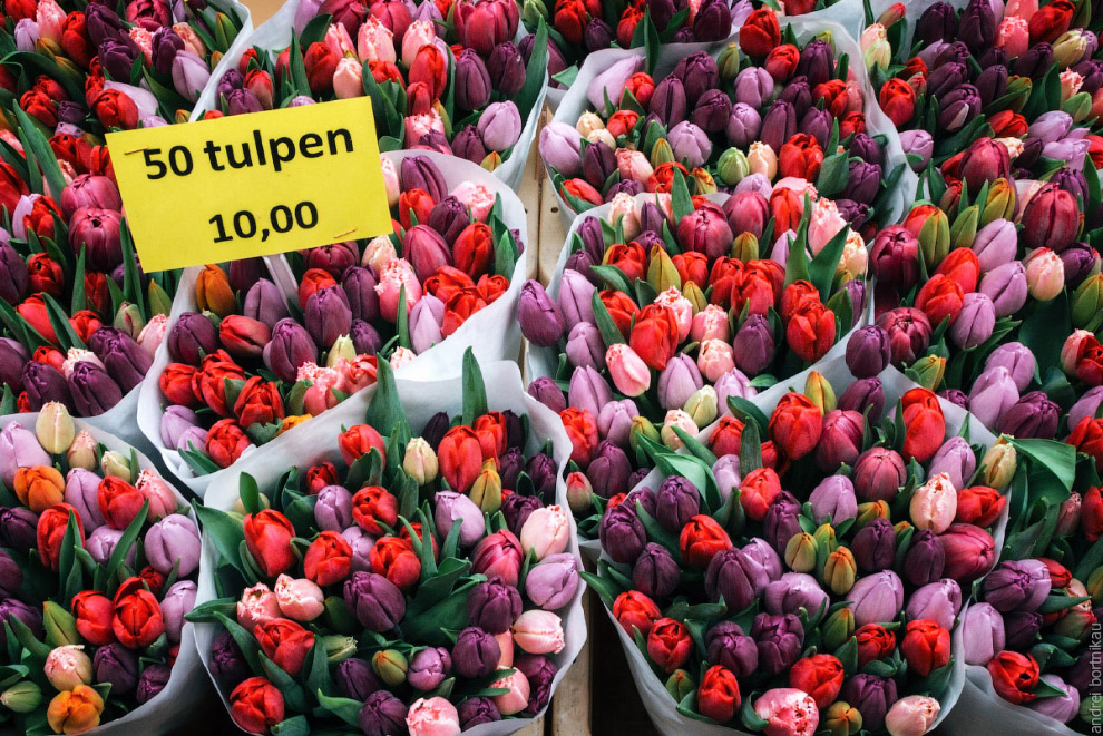 Tulips freshly picked for sale at flower market in Amsterdam, The Netherlands