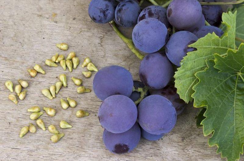 Виноградные косточки: мощная антиоксидантная сила, которую мы часто выплевываем