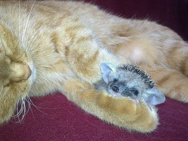 Настоящая кошка-мать