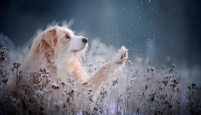 7 лайфхаков, которые позволят вам заснять «душу» любого животного на фото