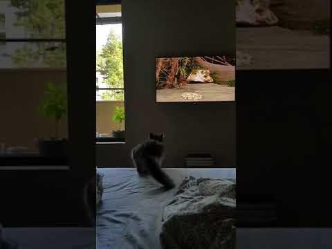 Неудачная охота кота