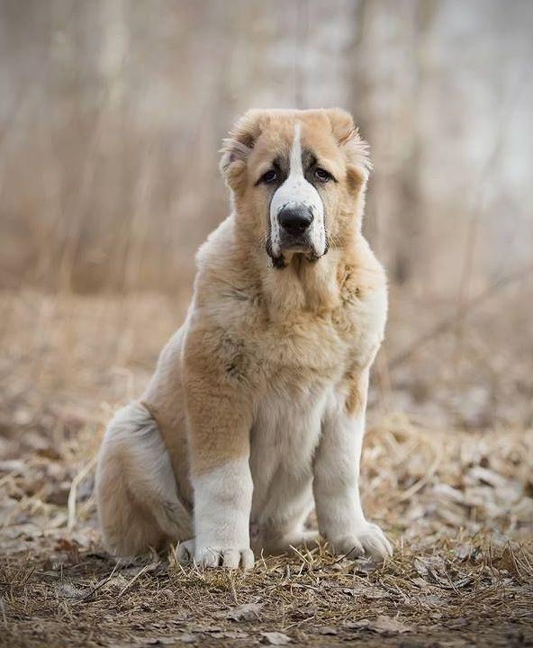 «Бог смотрит на людей глазами собак»… И видит он нелюдей