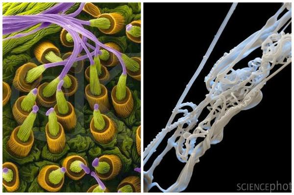 Микроскопический мир вокруг нас! фотография, Микроскоп, Насекомые, длиннопост