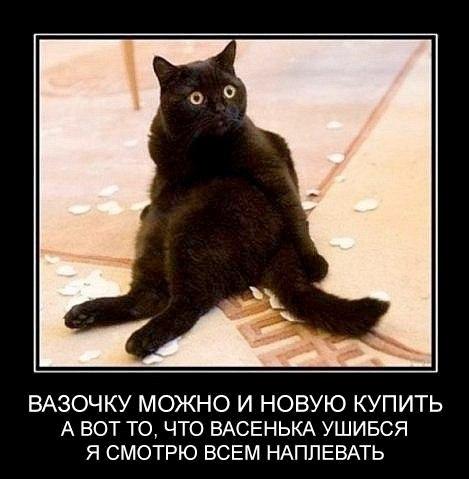 Котейки и смешные подписи