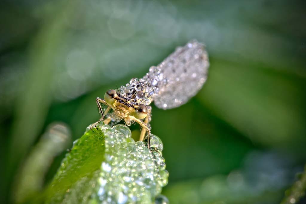 David Chambon 19 «Драгоценные» насекомые Давида Шамбона