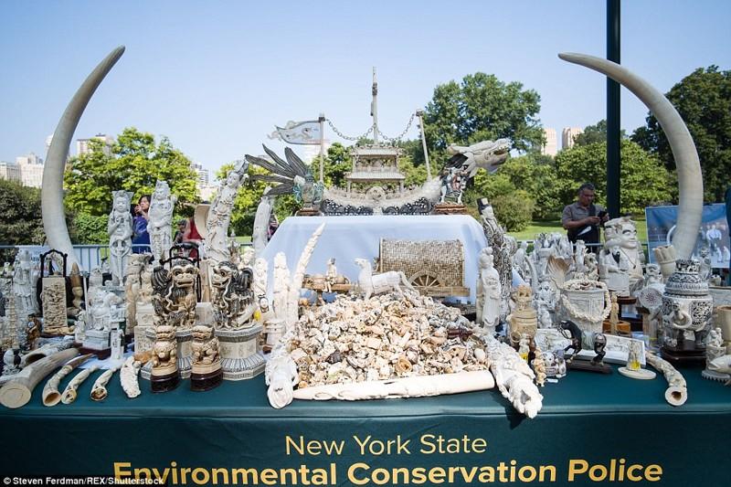 В Нью-Йорке раздробили контрафактные изделия из слоновой кости на 4,5 млн долларов