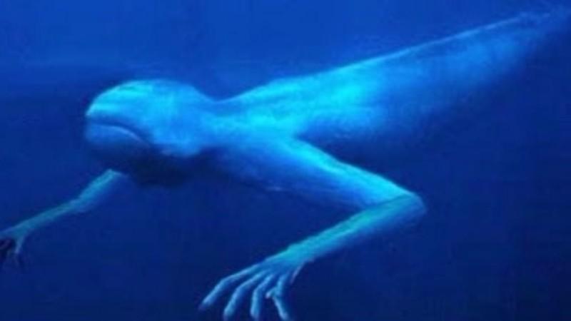 Странное подводное существо …