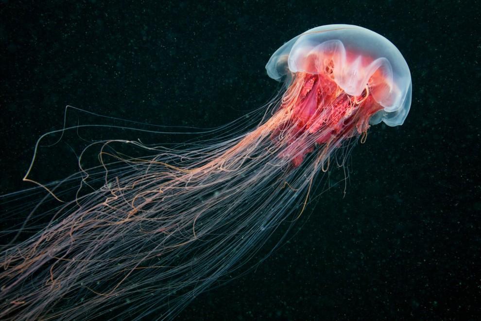 Semyonov12 Морские организмы на фотографиях Александра Семёнова
