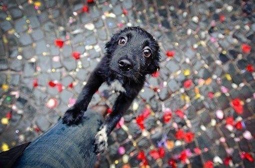 Милосердие  к животным — глупость или нет?