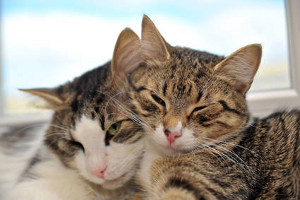 Две кошки в одном доме: как …