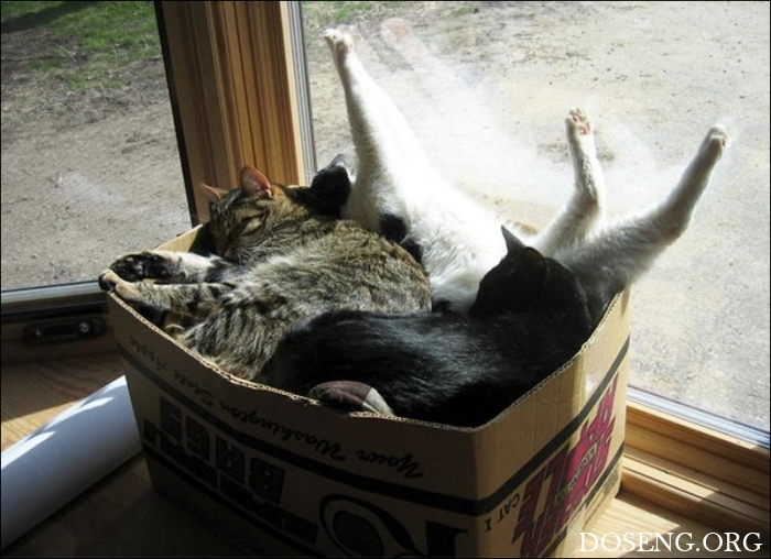 Коты стремятся заполнить собой любую емкость