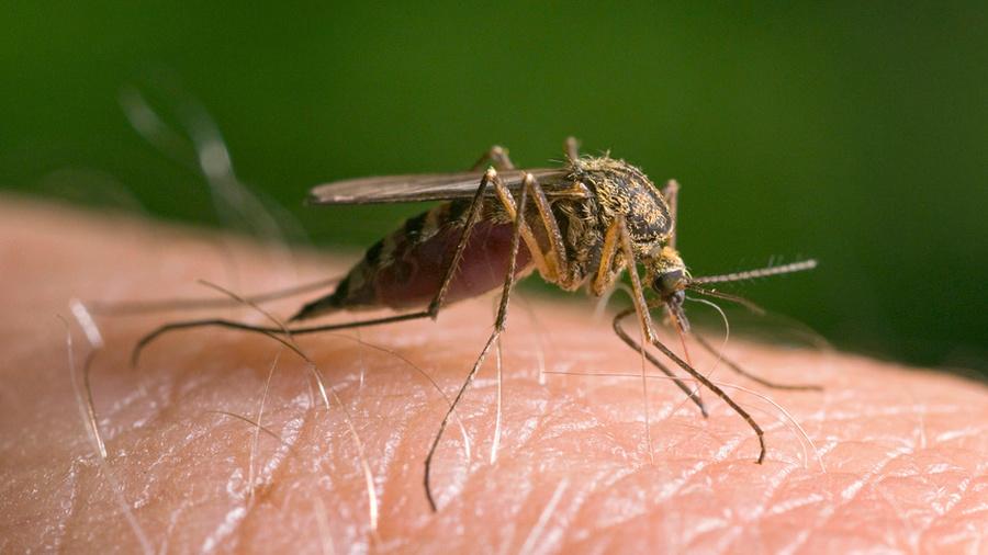Комары атакуют!