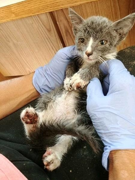 Двухмесячную кошечку с ранен…