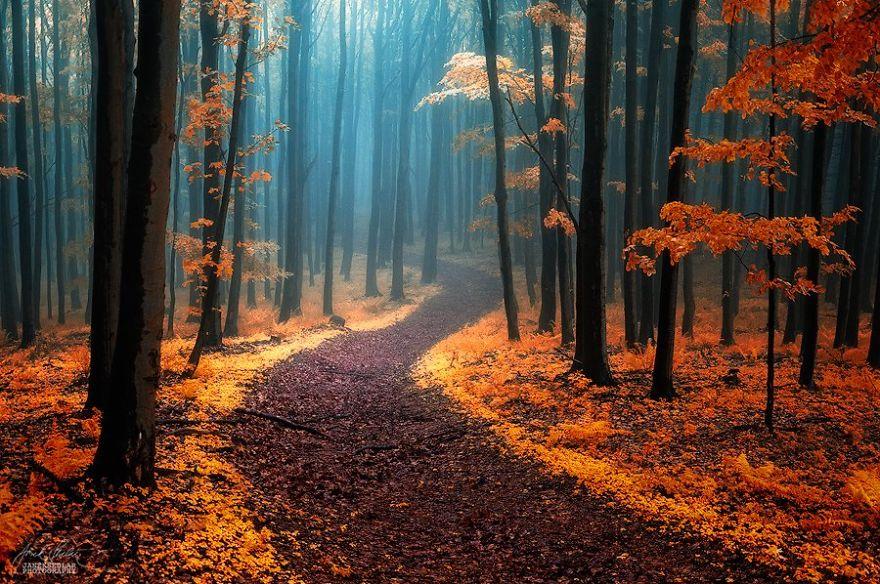 фотографии осеннего леса