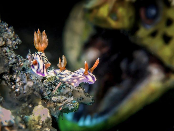 Подводный мир прекрасен 7