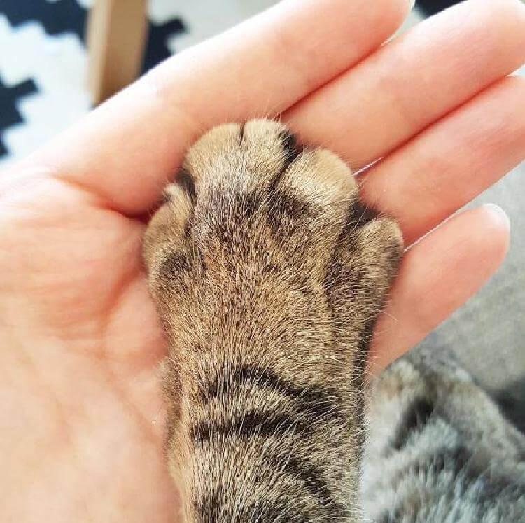 19 странных вещей, которые делают все владельцы котов