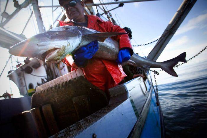 видео рыбака на акул