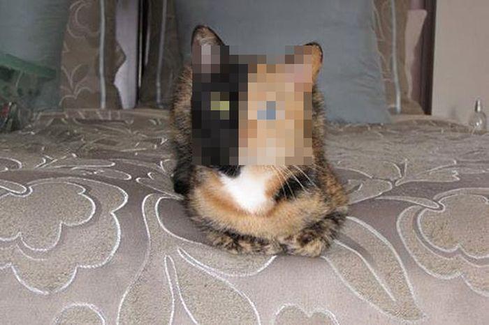 Двуликая кошка (7 фото)