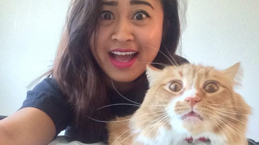 Котики в опасности: Инстаграм запретил фото с животными