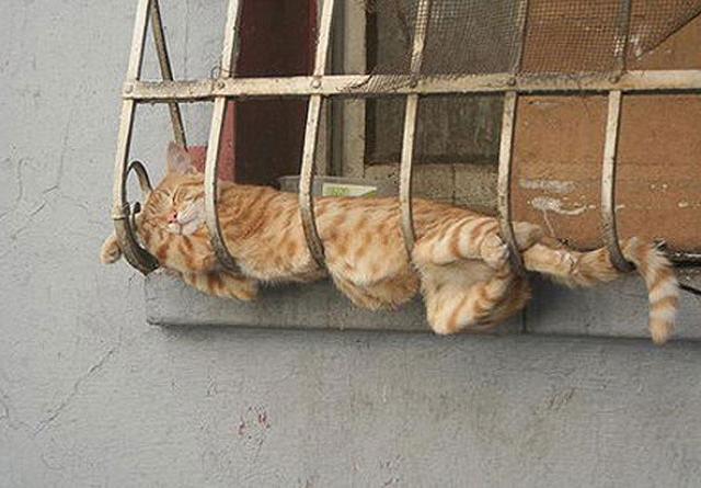 Как спят кошки / 23 фото
